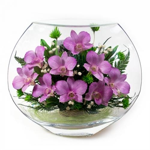 Стабилизированные орхидеи купить Комсомольск