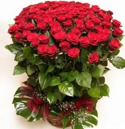 Купить розы Комсомольск-на-Амуре